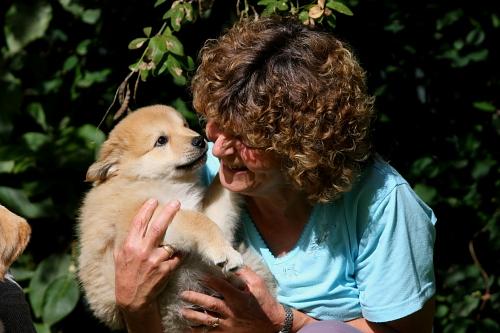 eurasier hund tunge